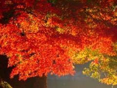 晩秋の輝き(1)