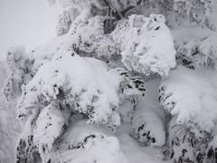 風雪に耐える!