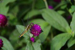 花と蜻蛉 DSC_2870