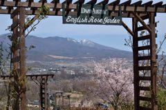English Rose Garden    DSC_7956