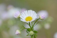 晩秋の野の花 DSC_8140
