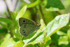 緑の輝き浴びて  DSC_8938