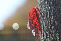 秋の置き土産 DSC_8229