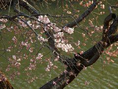 お堀の桜 DSCN7296