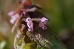 野の花 DSC05257