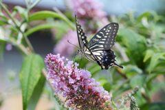 花と蝶 DSC_7276