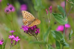 野の花にとまる DSC_0358