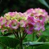 鮮やかに咲く  IMG_1632