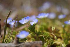 野の花咲く DSC05285