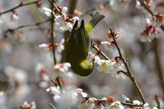 春の木洩れ日 DSC_9115