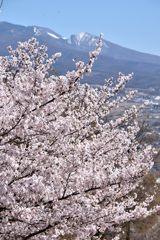 浅間山背景に DSC_7943