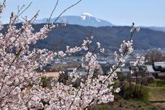 蓼科山背景に DSC_7939