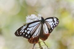 花の影 DSC_2703