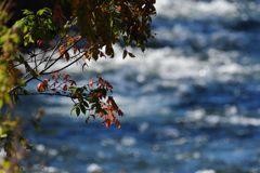 秋の川原 DSC_1618