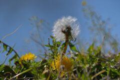 風を待つ  DSC_8936