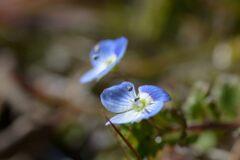 暖かい冬に咲く DSC_8339