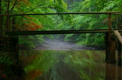 朝の川。小國神社にて