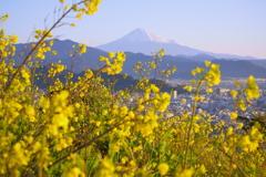 春はすぐそばに(黄色)
