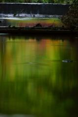 玉虫色の川