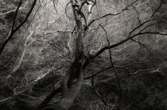 モノクロの樹