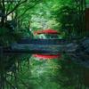 緑の中の赤い橋