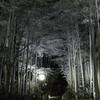 低彩度竹林