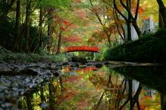 秋を映す川