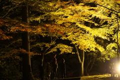 親子で紅葉狩り。奥津渓ライトアップ