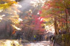 光る森に集まる人々
