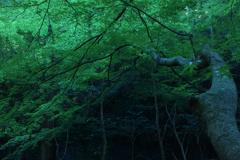 暗がりの緑