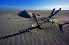 砂に埋れる
