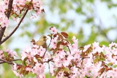 花かご(*^^*)