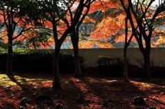 公園で見つけた秋