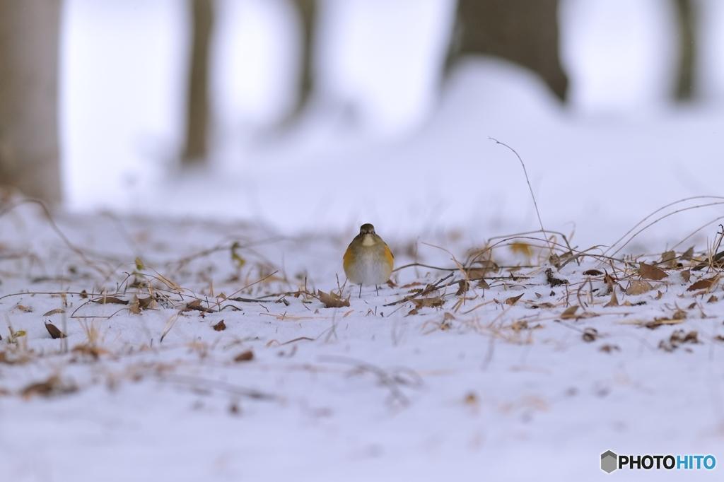 雪景色の中で♪