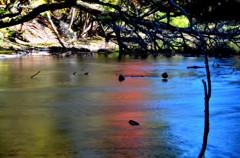 秋景色に染まる湯川