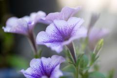 玄関先の花 2