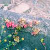 踊る里山、魅る田舎 - 10