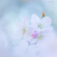 春のゆめ。。♪