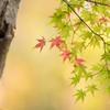 移ろう秋色。。♪(2)
