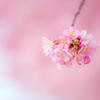 春色。。♪