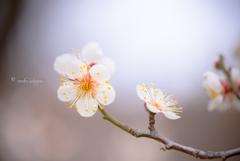 春待ち顔。。♪