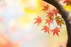 移ろう秋色。。♪