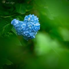 青いハート♡。。♪
