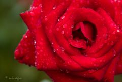 雨からの贈り物。。♪