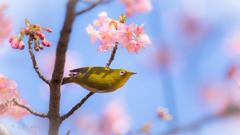 春の喜び。。♪