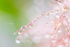 雨のメロディー。。♪