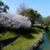 石井桶公園の桜