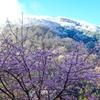 青空と雪と桜と