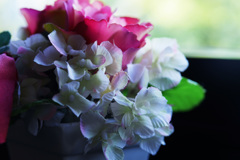 外を眺める花