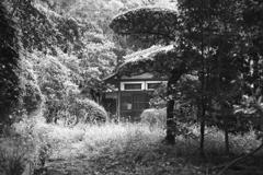 森にたたずむ家